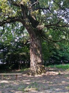 Poiana celor 4 Stejari ai lui Ştefan cel Mare
